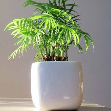 bamboo-4169957_640